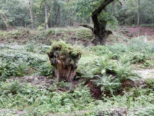boom-opgestuwde-aarde-5