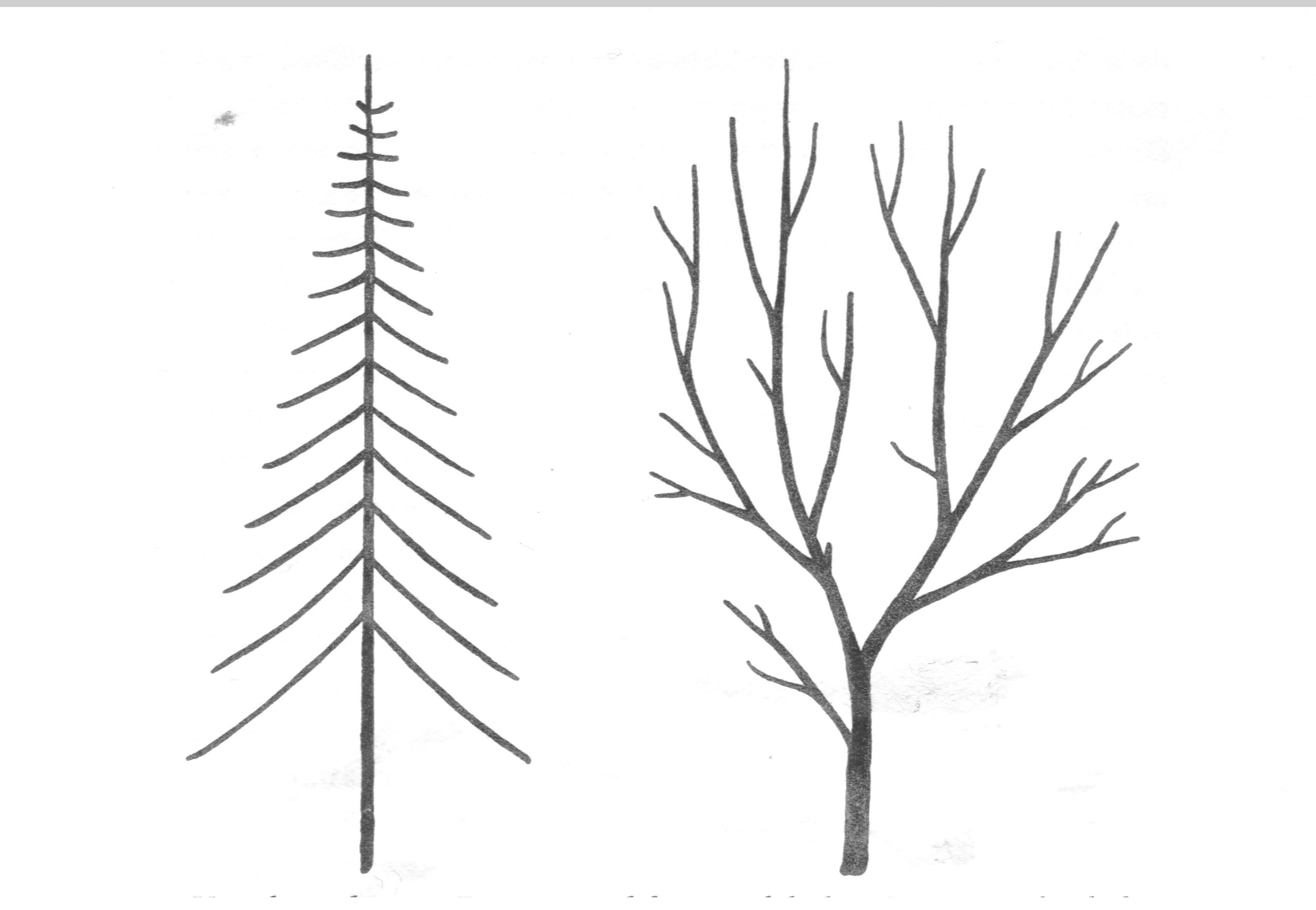 Vrijeschool grohmann leesboek voor de plantkunde 20 vrijeschool - Hoe een boom te verlichten ...