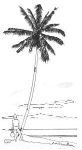 Grohmann 187 kokospalm
