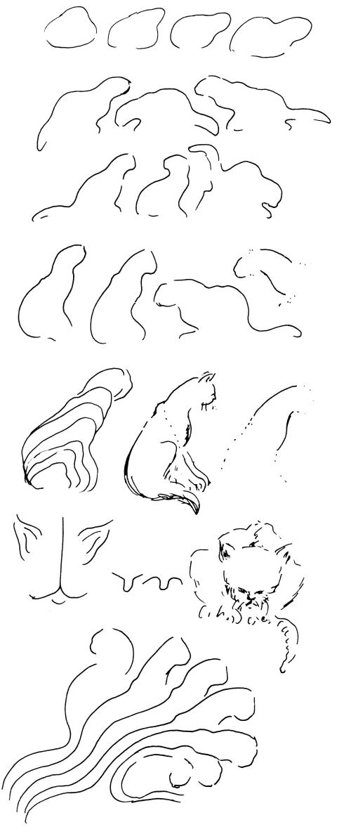 dierkunde leeuw 11