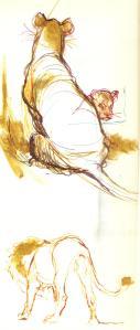 dierkunde leeuw 4