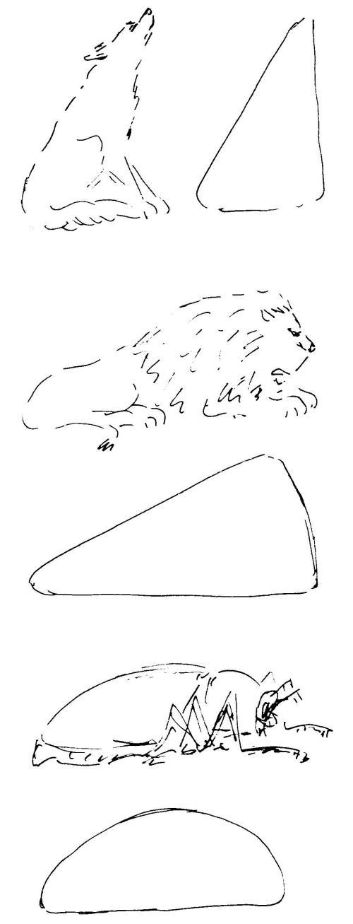 dierkunde leeuw 7