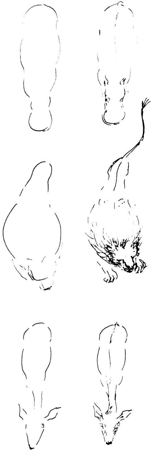 dierkunde leeuw 8