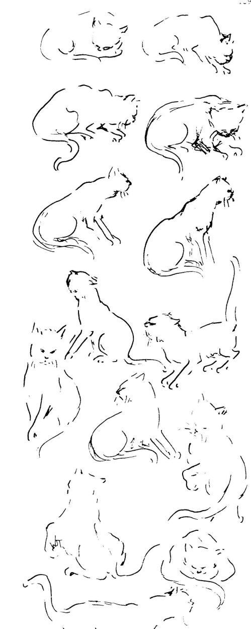 dierkunde leeuw 9