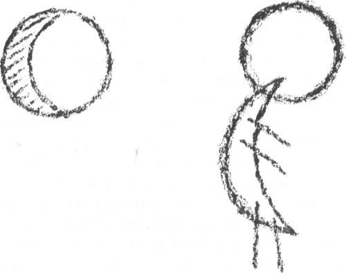 dierkunde Steiner 1