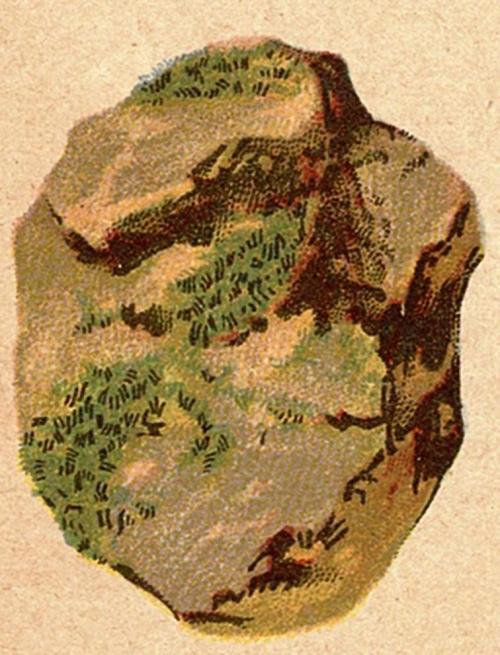 oliveniet