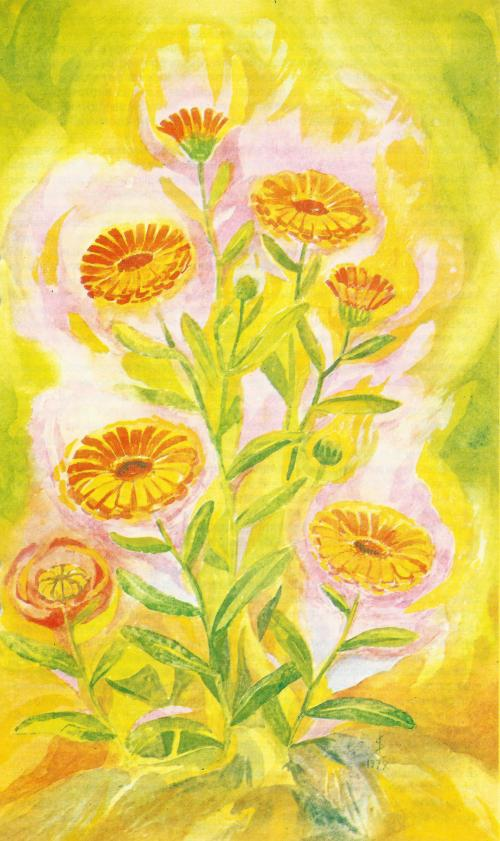 goudsbloem 2