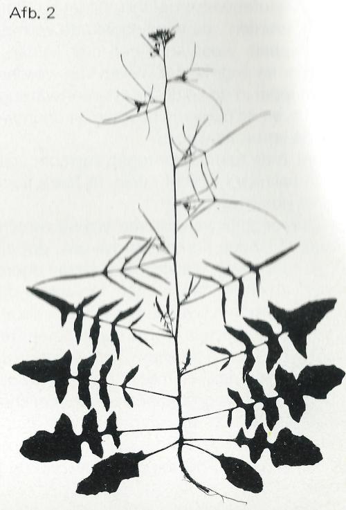metamorfose 2