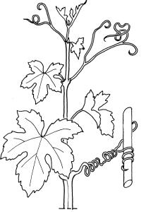 plantendelen 10