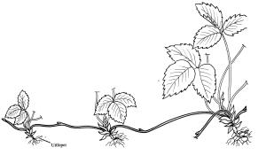 plantendelen 12
