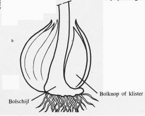 plantendelen 17