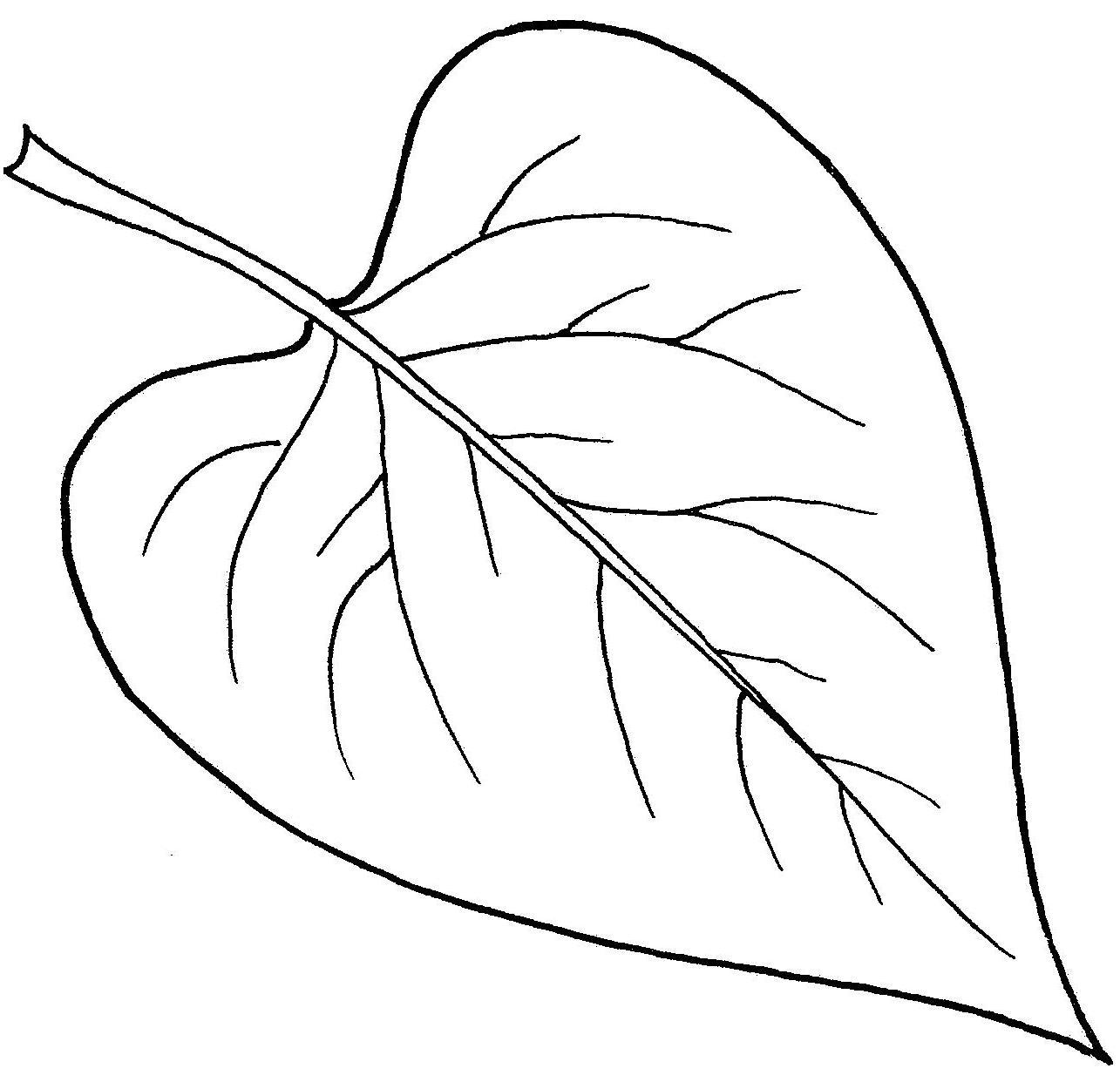 vrijeschool plantkunde plantendelen blad vrijeschool