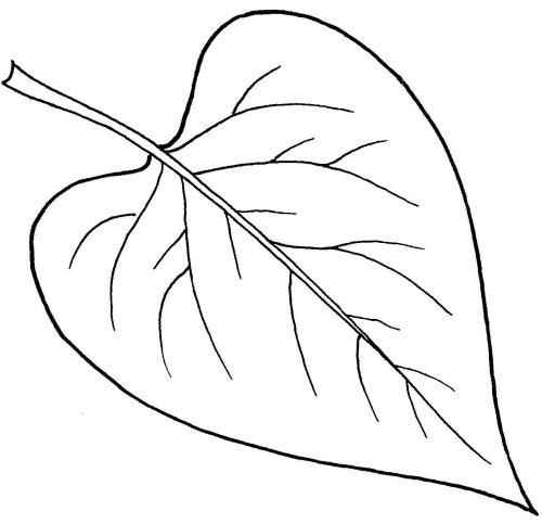 plantendelen 20