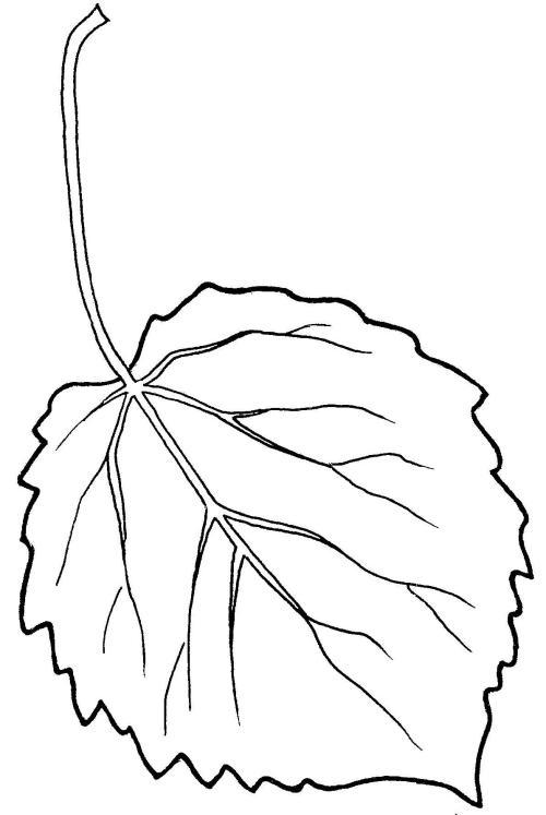 plantendelen 22