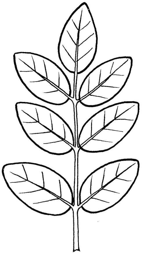 plantendelen 25