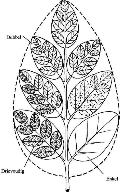 plantendelen 26