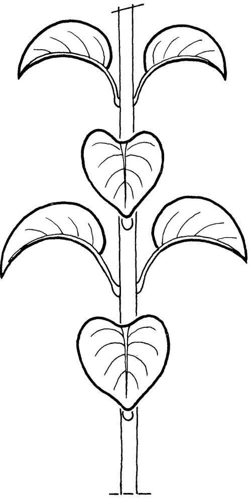 plantendelen 29