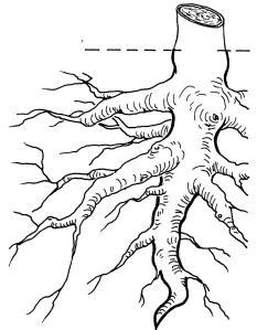 plantendelen 3
