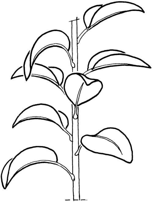 plantendelen 30