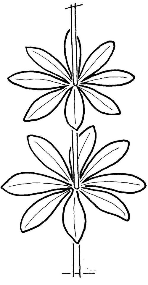 plantendelen 31