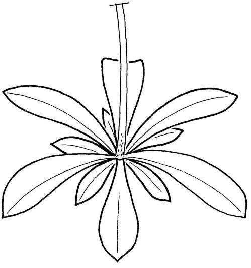 plantendelen 32