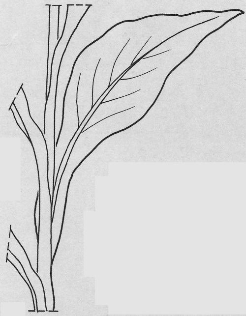 plantendelen 39