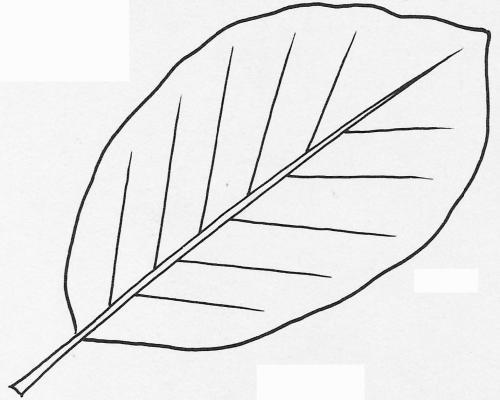 plantendelen 43