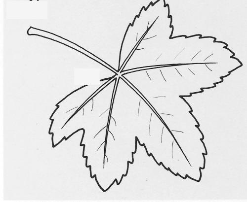 plantendelen 44