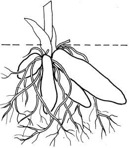 plantendelen 5