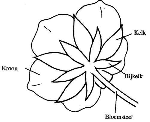 plantendelen 46