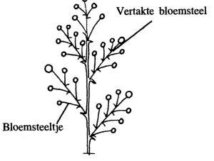 plantendelen 72