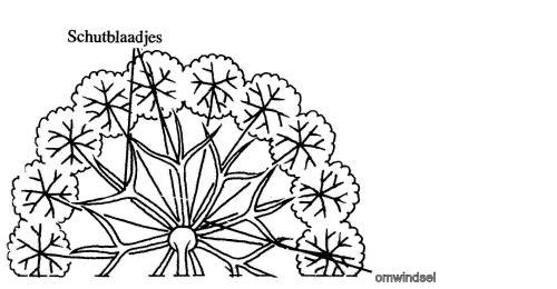 plantendelen 80